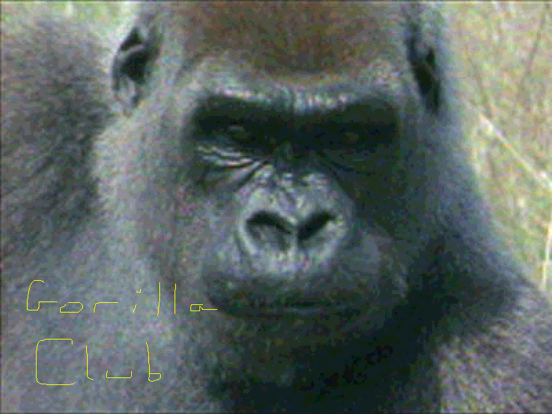 2. Everything you never thought you needed to know about the Gorilla