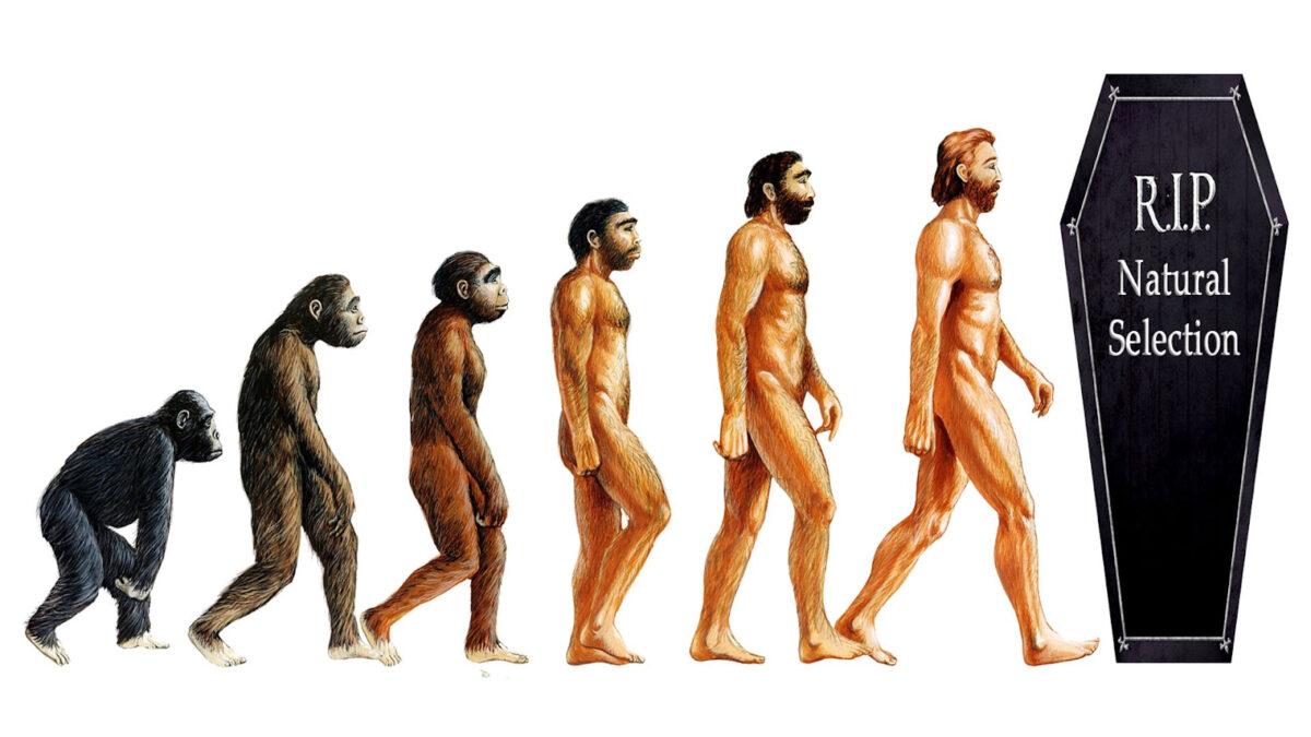 4. Human Evolution