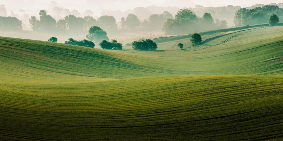 9. Landscape