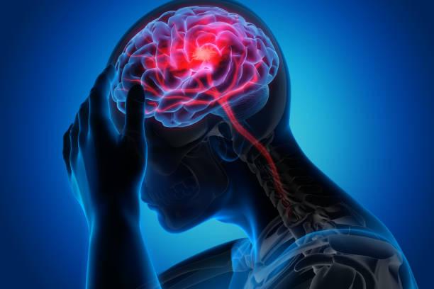 3. Evolution of the Human Brain